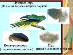 Пуховое перо Контурное перо Пух (Не имеют бородок второго порядка) Перья с ко