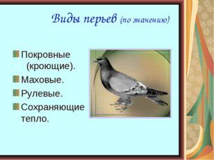 Виды перьев (по значению) Покровные (кроющие). Маховые. Рулевые. Сохраняющие