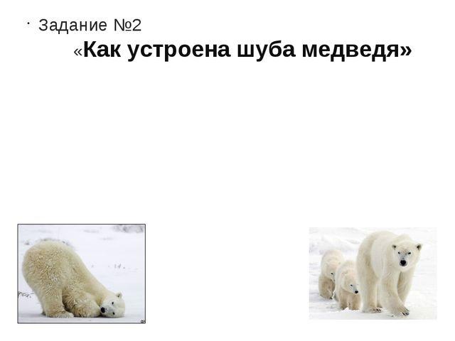 Задание №2  «Как устроена шуба медведя»