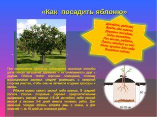. «Как посадить яблоню» . При размещении деревьев соблюдайте
