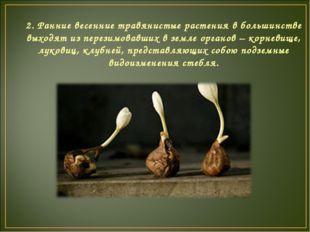 2. Ранние весенние травянистые растения в большинстве выходят из перезимовавш