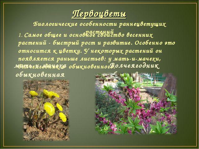 Первоцветы Биологические особенности раннецветущих растений 1. Самое общее и...