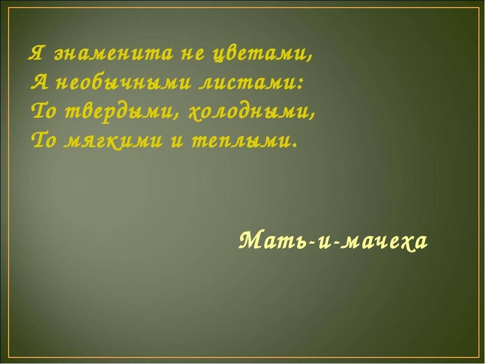 Я знаменита не цветами, А необычными листами: То твердыми, холодными, То мягк...