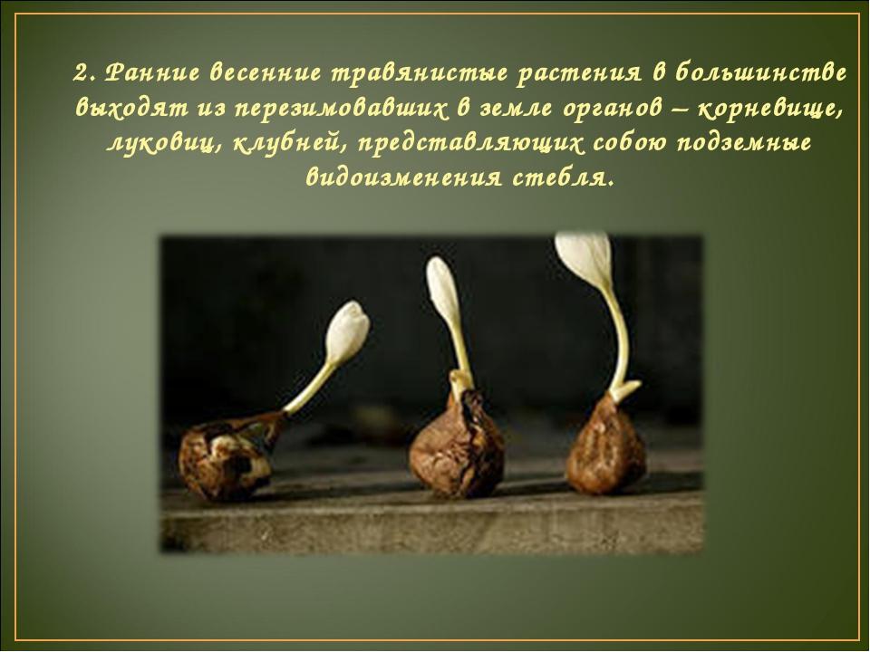 2. Ранние весенние травянистые растения в большинстве выходят из перезимовавш...