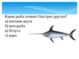 Какая рыба плавает быстрее других? а) китовая акула б) меч-рыба в) белуга г)