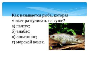 Как называется рыба, которая может разгуливать на суше? а) палтус; б) анабас;