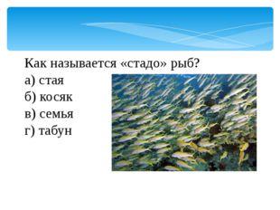 Как называется «стадо» рыб? а) стая б) косяк в) семья г) табун