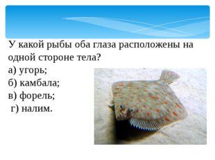 У какой рыбы оба глаза расположены на одной стороне тела? а) угорь; б) камбал