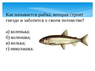 Как называется рыбка, которая строит гнездо и заботится о своем потомстве? а)