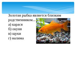 Золотая рыбка является близким родственником... а) карася б) окуня в) щуки