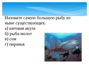 Назовите самую большую рыбу из ныне существующих. а) китовая акула б) рыба-