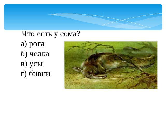 Что есть у сома? а) рога б) челка в) усы г) бивни