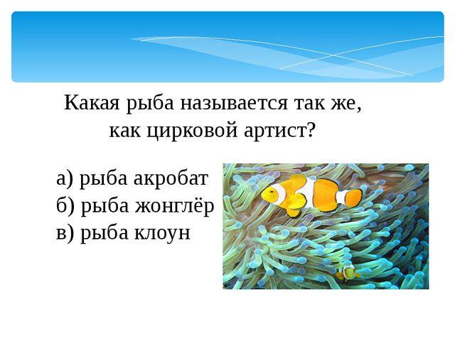 Какая рыба называется так же, как цирковой артист? а) рыба акробат б) рыба жо...