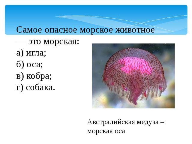 Самое опасное морское животное — это морская: а) игла; б) оса; в) кобра; г) с...
