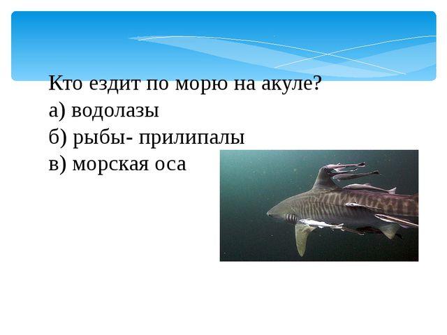 Кто ездит по морю на акуле? а) водолазы б) рыбы- прилипалы в) морская оса