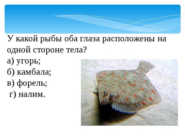 У какой рыбы оба глаза расположены на одной стороне тела? а) угорь; б) камбал...