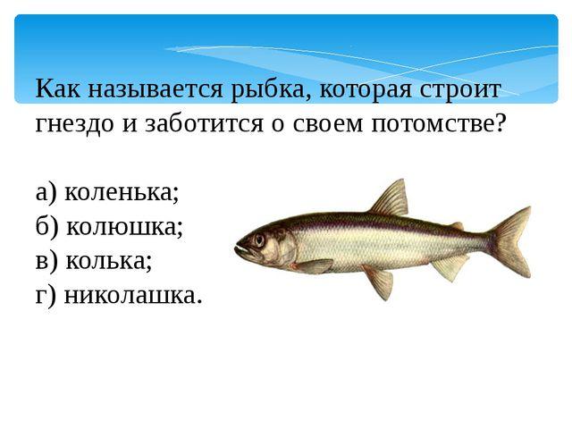 Как называется рыбка, которая строит гнездо и заботится о своем потомстве? а)...