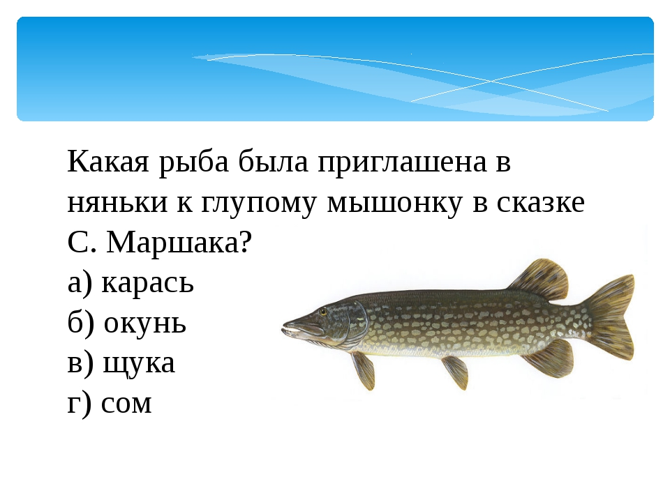 Какая рыба была приглашена в няньки к глупому мышонку в сказке С. Маршака? а)...