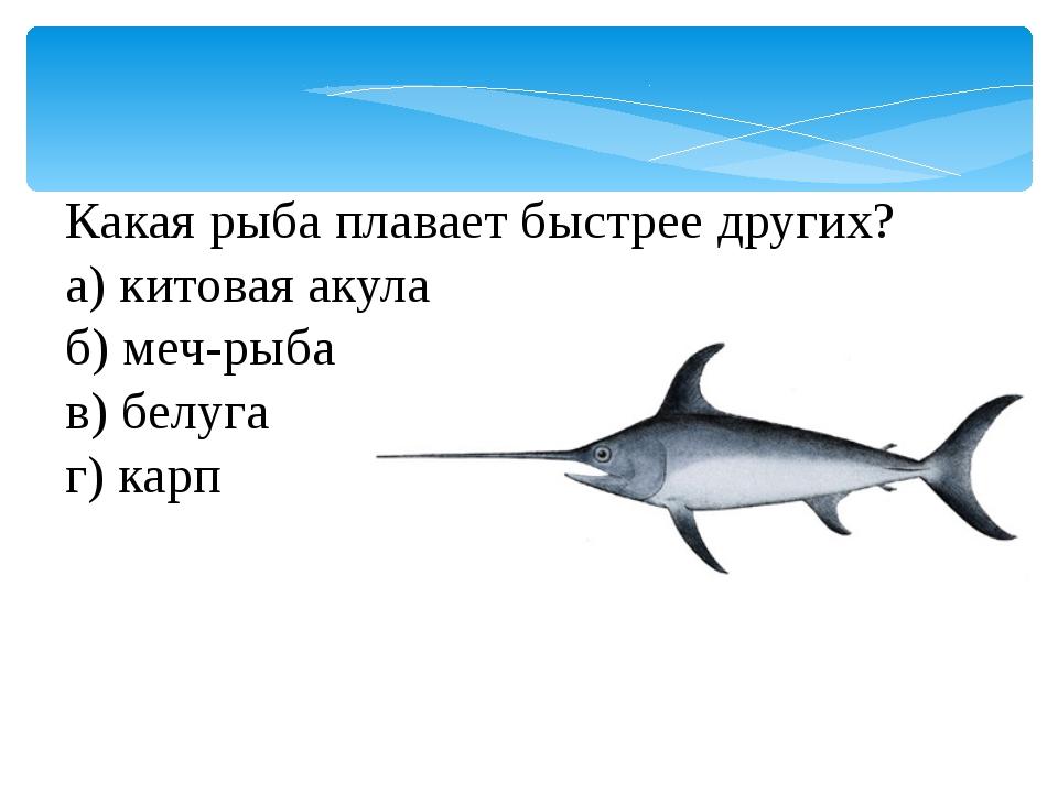 Какая рыба плавает быстрее других? а) китовая акула б) меч-рыба в) белуга г)...