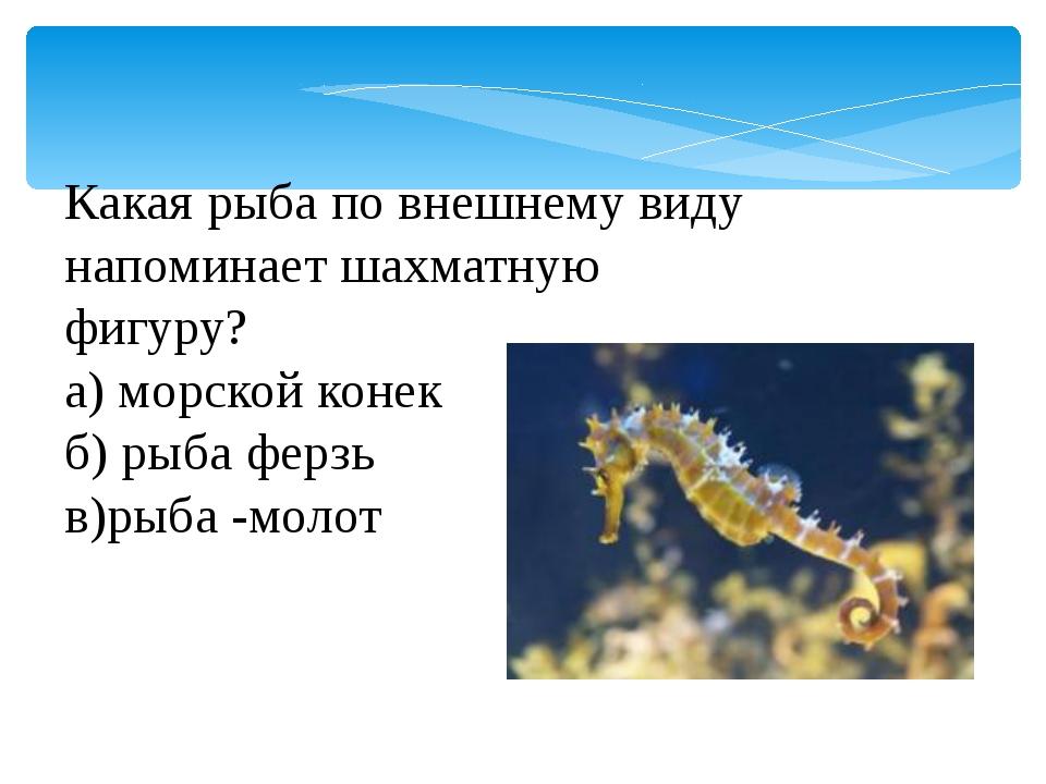 Какая рыба по внешнему виду напоминает шахматную фигуру? а) морской конек б)...