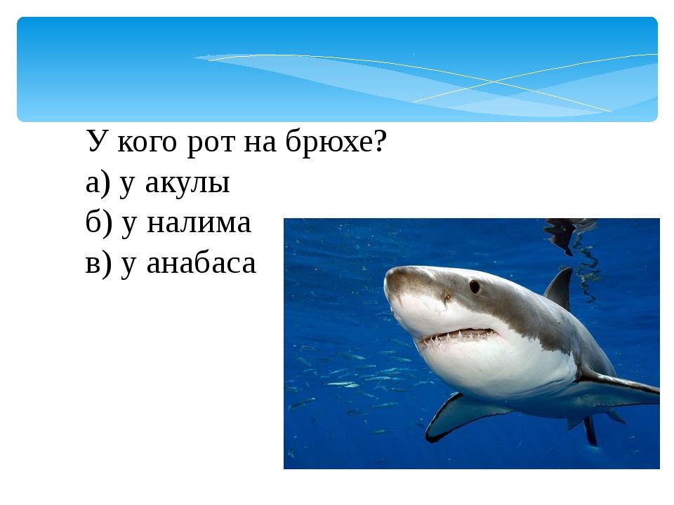 У кого рот на брюхе? а) у акулы б) у налима в) у анабаса