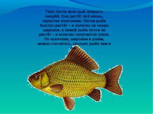 Тело почти всех рыб покрыто чешуёй. Она растёт всё жизнь, нарастая колечками.