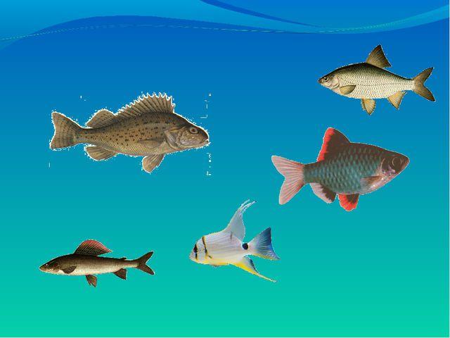 Рыбки урок математики 1 класс фгос