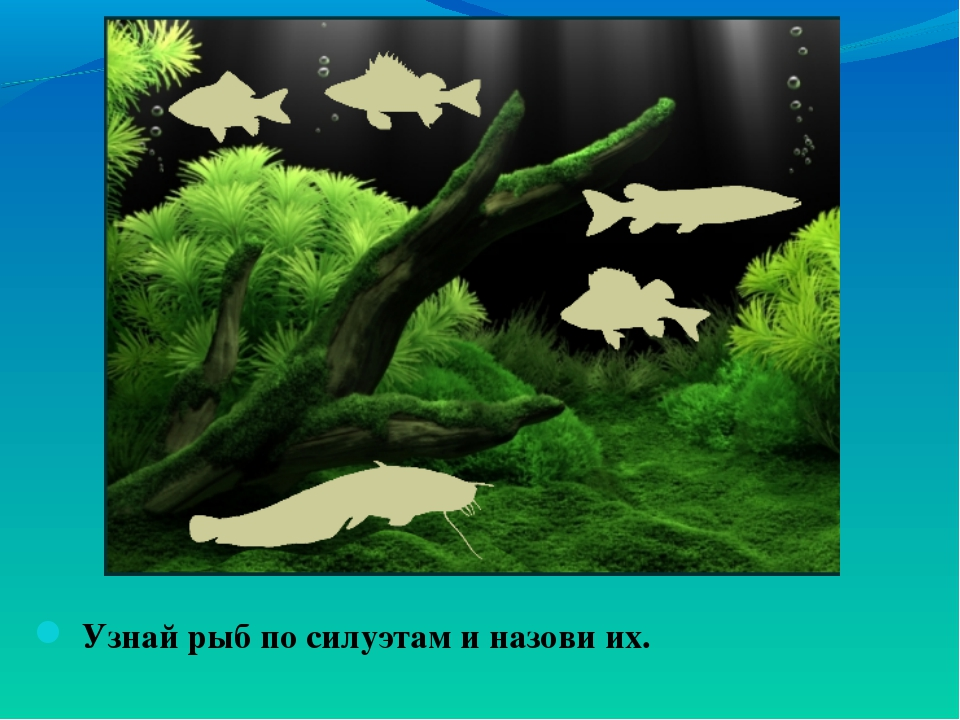 Узнай рыб по силуэтам и назови их.