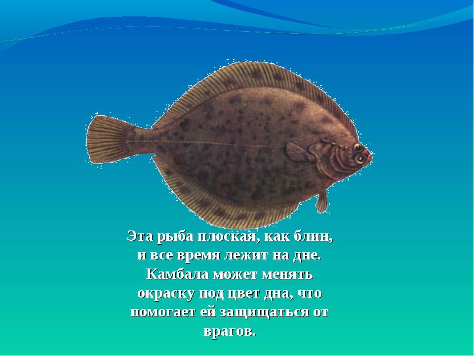 Эта рыба плоская, как блин, ивсе время лежит надне. Камбала может менять ок...