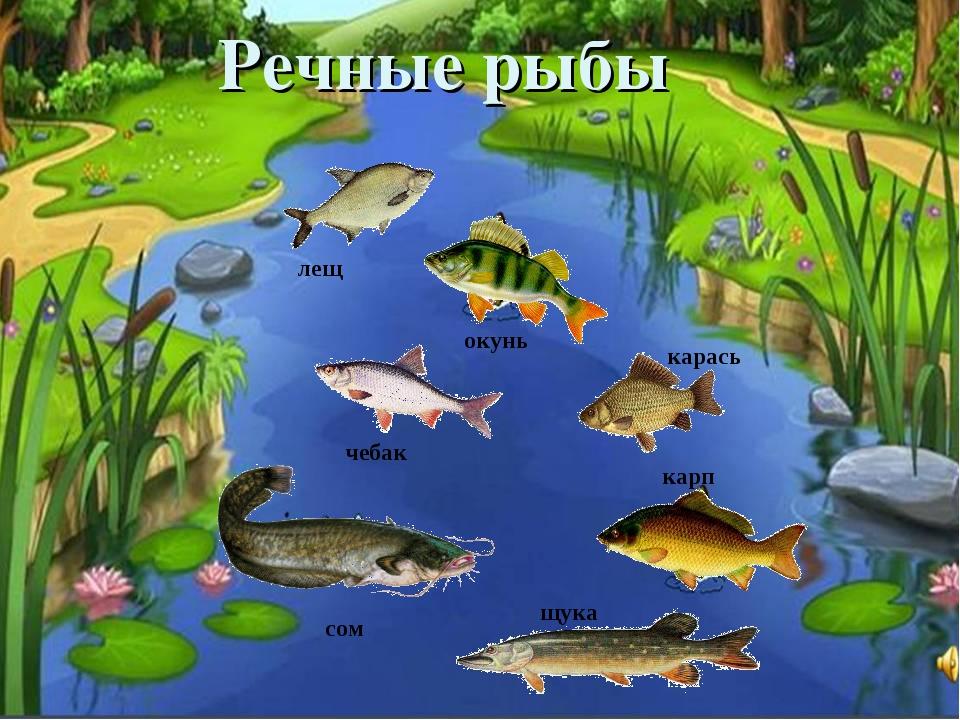Речные рыбы щука окунь сом карась чебак лещ карп