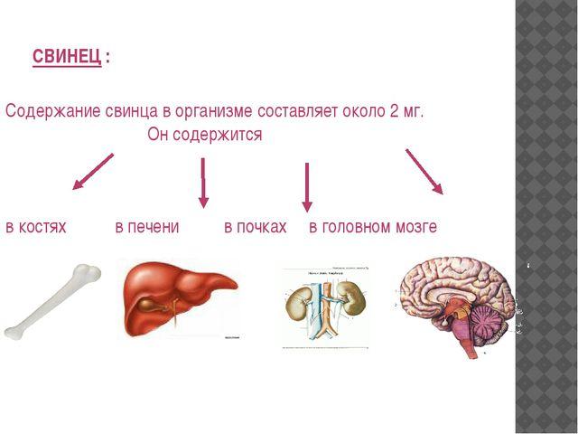 СВИНЕЦ : Содержание свинца в организме составляет около 2 мг. Он содержится в...