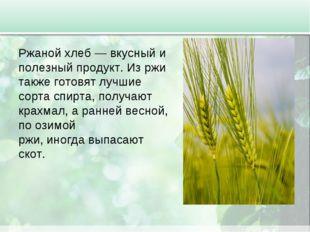 Ржаной хлеб — вкусный и полезный продукт. Из ржи также готовят лучшие сорта с