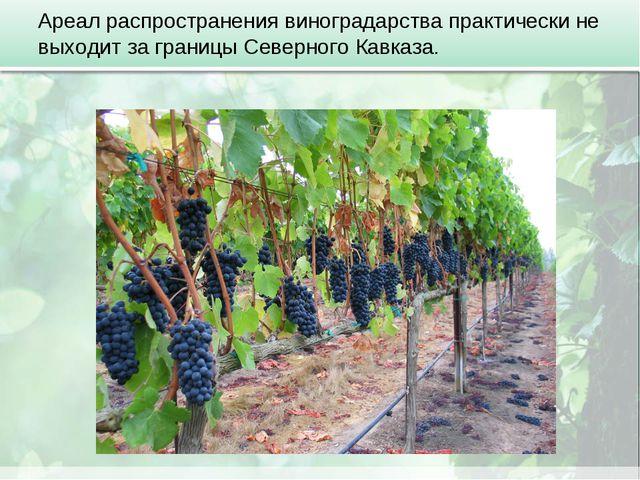 Ареал распространения виноградарства практически не выходит за границы Северн...
