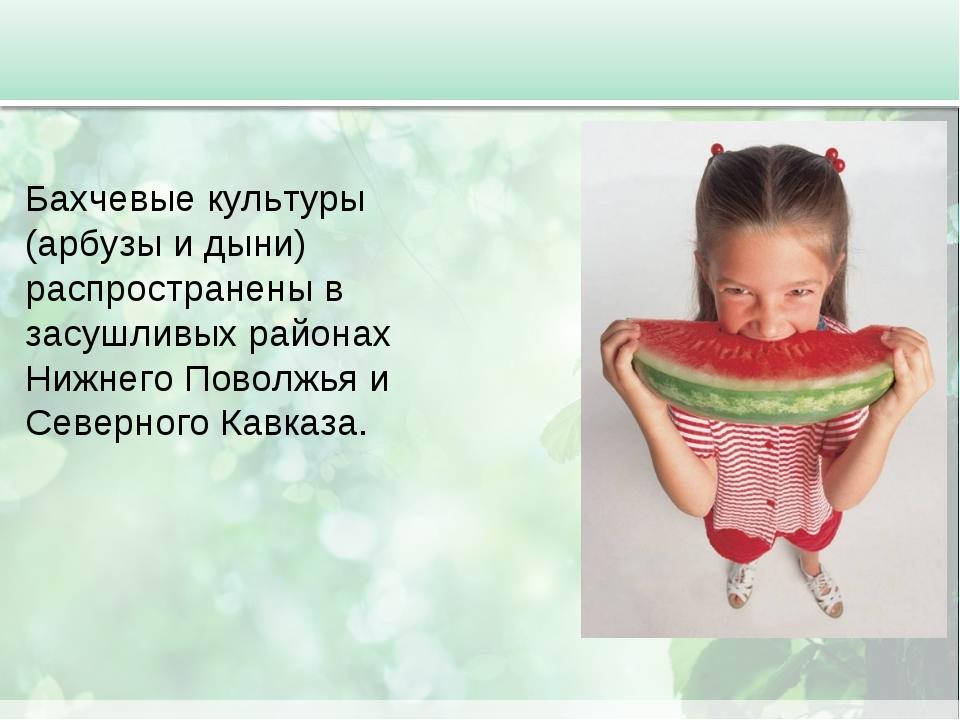 Бахчевые культуры (арбузы и дыни) распространены в засушливых районах Нижнего...