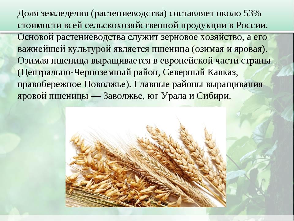 Доля земледелия (растениеводства) составляет около 53% стоимости всей сельско...