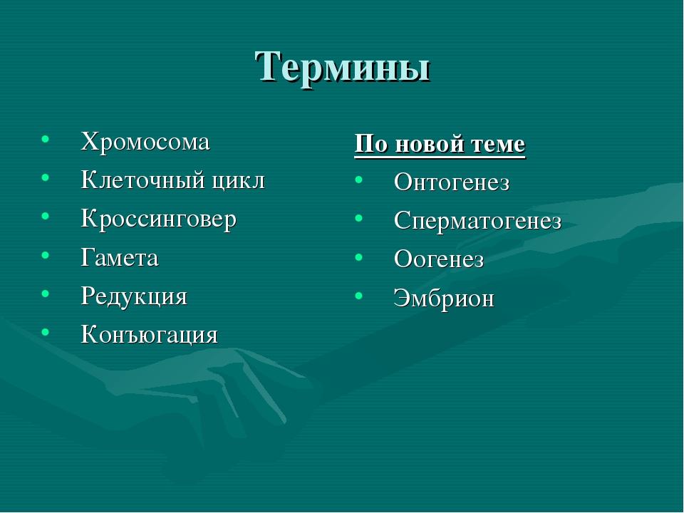 Термины Хромосома Клеточный цикл Кроссинговер Гамета Редукция Конъюгация По н...