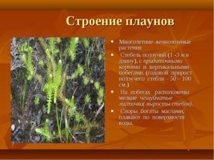 Строение плаунов Многолетние вечнозеленые растения Стебель ползучий (1 -3 м