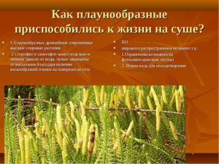 Как плаунообразные приспособились к жизни на суше? 1.Плаунообразные древнейши