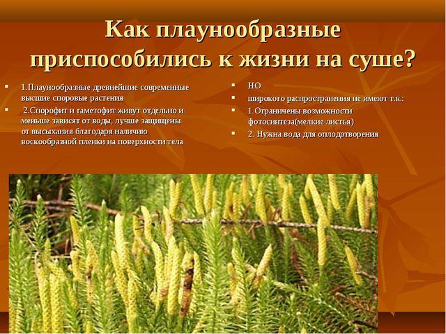 Как плаунообразные приспособились к жизни на суше? 1.Плаунообразные древнейши...