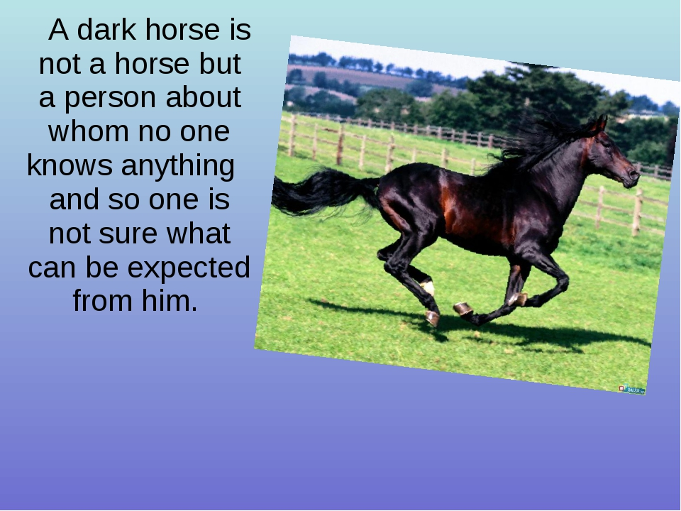 A dark horse is not a horse but a person about whom no one knows anything and...