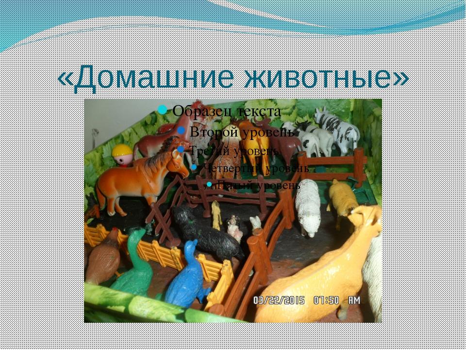 «Домашние животные»
