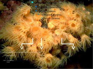 Распределение жизни в океане происходит почти так же как и на суше. главные ф