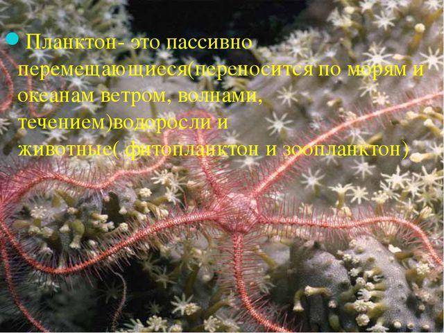 Планктон- это пассивно перемещающиеся(переносится по морям и океанам ветром,...