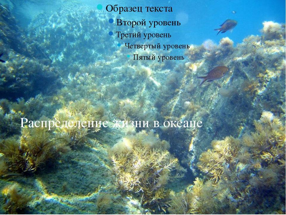 Распределение жизни в океане