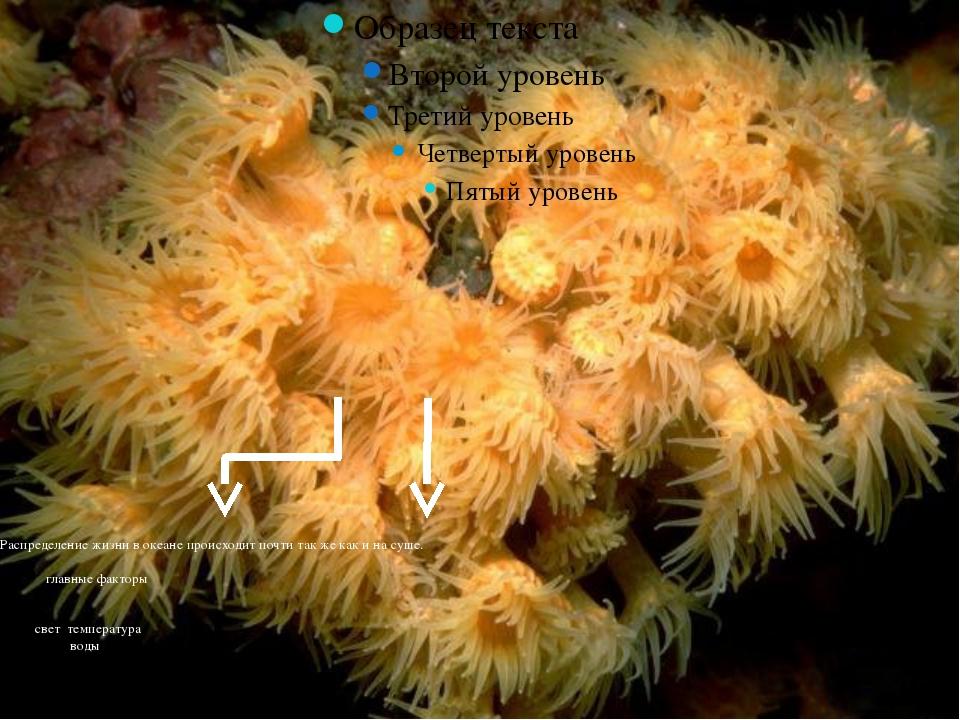 Распределение жизни в океане происходит почти так же как и на суше. главные ф...