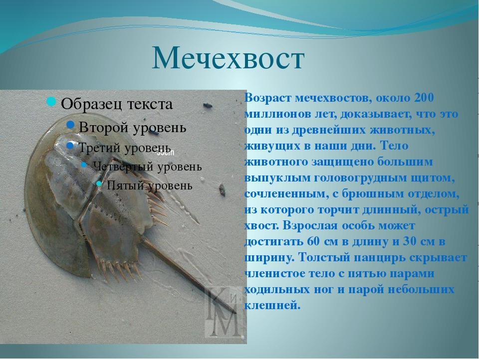 Мечехвост Возраст мечехвостов, около 200 миллионов лет, доказывает, что это...