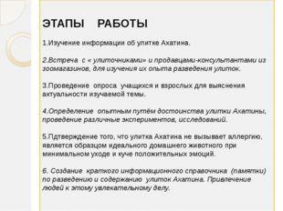 ЭТАПЫ РАБОТЫ 1.Изучение информации об улитке Ахатина. 2.Встреча с « улиточни