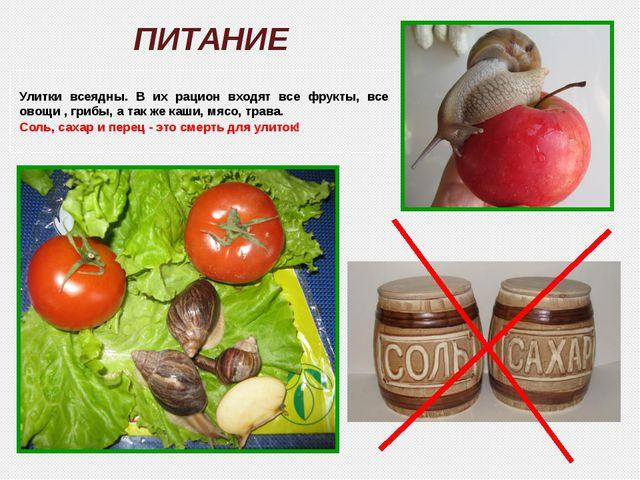 Улитки всеядны. В их рацион входят все фрукты, все овощи , грибы, а так же ка...