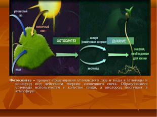 Фотосинтез – процесс превращения углекислого газа и воды в углеводы и кислоро