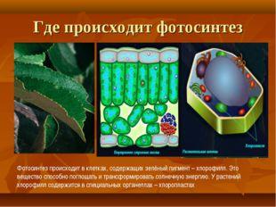Где происходит фотосинтез Фотосинтез происходит в клетках, содержащих зелёный